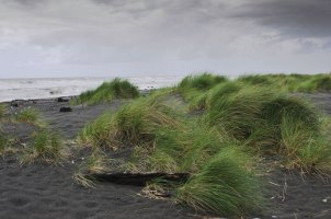 West Coast Beach, South Island