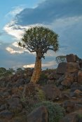 At Quivertree Forest Camp, Keetmanshoop
