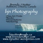 Brenda J. Nutter Photography