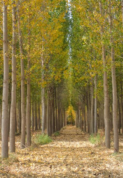 Forest near Fromista